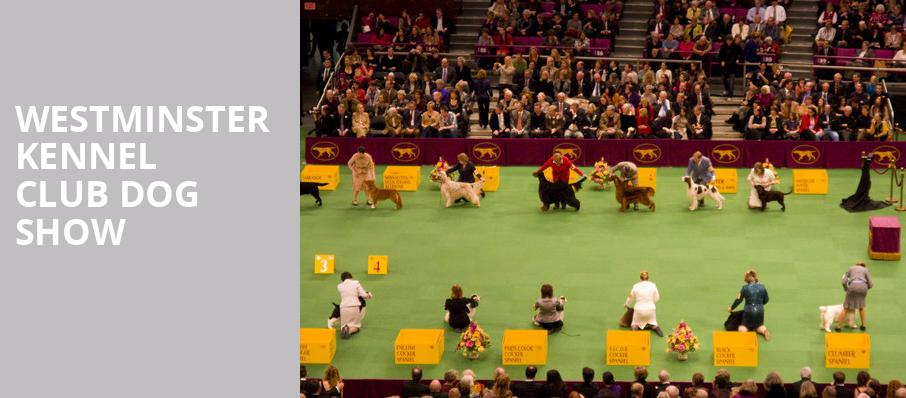 westminster kennel club dog show madison square garden new york